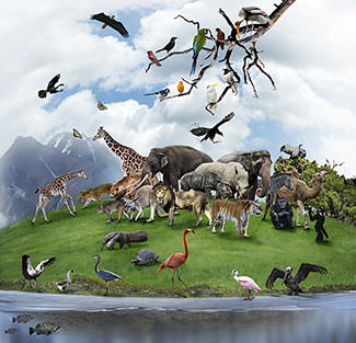 Communicates With Animals This Is The Best Explanation For The Migration Of The Animals To Noahs Ark In Genesis Told Noah To Build An Ark In