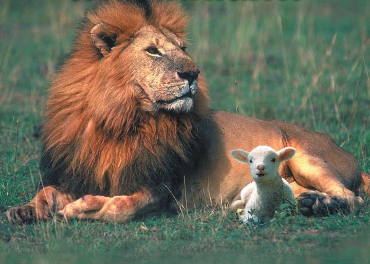 Animals in God's Plan!