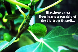an examination of the recurring figure of the fig tree in the bible