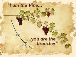 The Three Tree of Israel: Olive